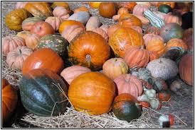Pumpkin Patch Durham North Carolina by Best Corn Mazes Near Raleigh Gross Farms In Sanford