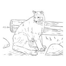 Carolina Panthers Coloring Pages Elegant 10 Printable Panther Your Toddler Will Love Of Black Images