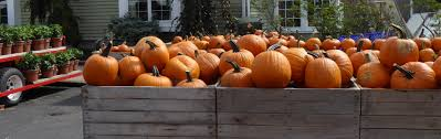 Pumpkin Picking Nj Colts Neck by The Journalday Trip Delicious Orchards The Journal