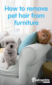 Dogs That Dont Shed Their Fur by Best 25 Dog Shedding Remedies Ideas On Pinterest Dog Shedding