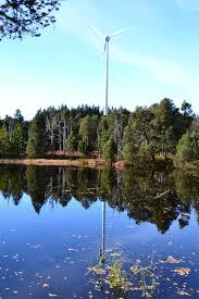 fleur et plante du lac images gratuites paysage arbre eau la nature plante la