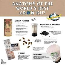 What Is The Best Christmas Tree Variety by Christmas Tree Grow Kit