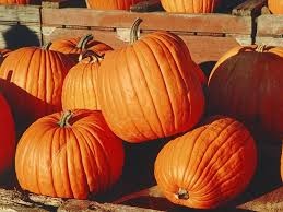 Northern Illinois Pumpkin Patches by Pumpkin Patches Corn Mazes Fall Festivals Our Area Batavia Il