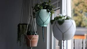 zimmerpflanzen in der hängeel das gibt es zu beachten