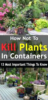 Patio Ideas How Not To Kill Plants In Containers 13 Most Important Things Know