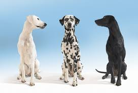 What Kind Of Dogs Shed The Most by Dog Breed Pictures The Right Dog For You U0026 Your Health
