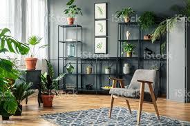 elegante graue wohnzimmer interieur mit pflanzen auf metall regale gegen dunkle wand mit formteil hinter einem vintage sessel stockfoto und mehr