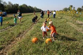 Southern Ohio Pumpkin Patches by 11 Awesome Pumpkin Patches In Louisiana