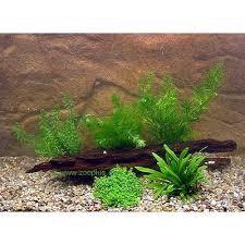 animalerie lot de plantes pour aquarium de crevettes et de