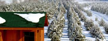 Plantable Christmas Trees Columbus Ohio by Ohio Christmas Tree Association