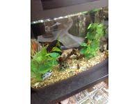 Extra Large Fish Tank Decorations by New U0026 Used Aquariums For Sale Gumtree
