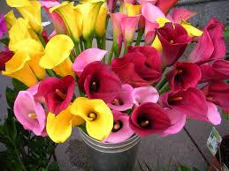flower bulbs india buy seeds india terrace