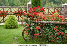 Flower Bed In The Cart