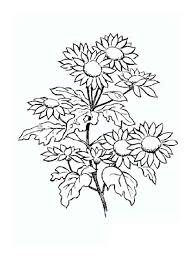 Daisy Flower Coloring Pages 10