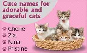 cat names really unique cat names you ll definitely
