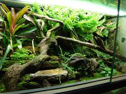 Star Wars Fish Tank Decorations by 161 Best Diy Terrarium Images On Pinterest Terrarium Ideas