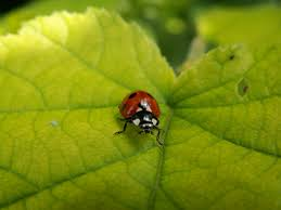 Attracting Insects To Your Garden by Attracting Beneficial Insects To Your Garden From Soil 2 Sky