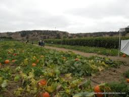 Best Pumpkin Patch In San Bernardino County by Pumpkin Patches In The Inland Empire