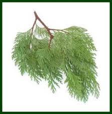 El Dorado County Christmas Tree Growers