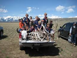Antler Auction Nets Record Prices For Boy Scouts, Elk Refuge ... 3pcsset Christmas Antlers Decoration For Car Truck Costume Photos Opening Day Of Wyomings Shed Hunting Season Outdoor Life Preserving Lvet Antlers On Deer Outdoors Aberdeennewscom Elk Tracks Galore Records Set At Boy Scout Antler Auction Headed To The Lower 48 Pic Taken In Yukon Canada Youtube Lumiparty Reindeer Suv Van And Amazoncom Mystic Industries Original Vehicle With Jumbo Redbrown Auto