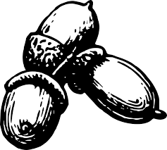 Acorn clipart seed 4