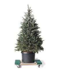 Balsam Christmas Tree Care by 6 Tips For Live Christmas Trees Real Simple