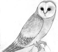 Barn Owl By SapphireClaw On DeviantArt Pencil Drawings Of Old Barns How To Draw An Barn Farm Owl On Branch Drawing Tattoo Sketch Original Great Finished My Barn Owl Drawing Album On Imgur By Notreallyarstic Deviantart Art Black And White Panda Free Tree Line Download Linear Vector Hand Stock 263668133 Top Theme House Clipart Photos Country Projects For Kids Sketching Tutorial With Quick And Easy Techniques Of A Silo Ideals Illinois Experimental Dairy South