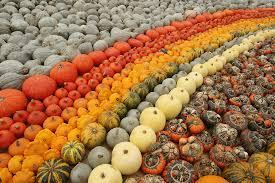 Varieties Of Pumpkins by Pumpkin And Its Magickal Aspects The Magick Kitchen