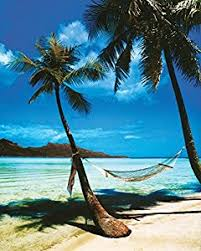 Amazon Tropical Beach Hammock Palm Trees Art Poster Print
