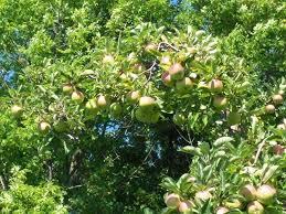 Apple Pumpkin Picking Syracuse Ny by U Pick Apples U0026 Pumpkins Ontario Orchards