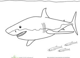 Preschool Coloring Worksheets Color The Great White Shark