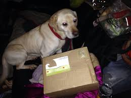 Barks Bunnies Multi Dog Box | Lucy The Labrador Lintran Dog Transit Box In Chesterfield Derbyshire Gumtree Cab 5 Animal Boxes Fitted Dog Box Best Fit For Vw Touareg Maryland Sled Adventures Llc New Truck Project 2 Hole Alinum 200 Gift Corgi Stock Illustration 506388 Ideas Custom Alinum Biggahoundsmencom The Dapper October 2017 Subscription Review Coupon Working Truck Dogs Housed Metal Boxes Located Under Semi Used Kennel Suppliers And