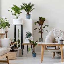 die besten immergrünen und robusten zimmerpflanzen