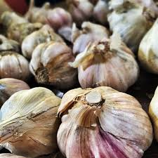 garlic brandon pic jpg