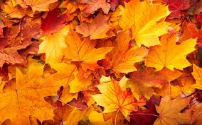 Kenova Pumpkin House 2017 by 10 Best Things About Fall