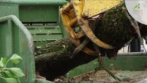 chambre agriculture du tarn tarn le bois énergie chambre régionale d agriculture d occitanie