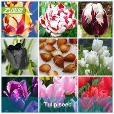 aliexpress buy zlking 1 pcs tulip bulbs not tulip seeds 19
