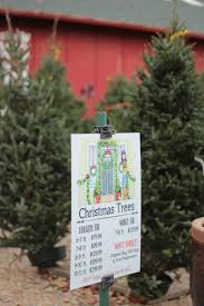 Diy Christmas Tree Preservative by December 2014 U2013 Chic éthique