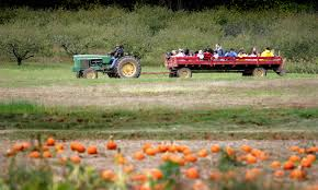 Pumpkin Picking In Ct by Best Bets For Halloween Fun Around Connecticut Cbs Connecticut