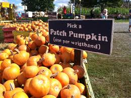 Kent Ohio Pumpkin Patches by 7 Non Scary Halloween Activities