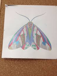 Our Foreign Rights Team Decorating Their Office With A Moth From Millie Marottas Animal Kingdom Colouring