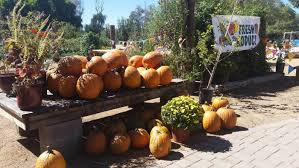 Pumpkin Patch Glendale Co don u0027t miss these 10 great pumpkin patches in arizona this fall