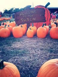 Southern Illinois Pumpkin Patches by Marlow U0027s Pumpkin Patch Opdyke Il Photos U0026