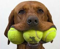 Image Is Loading BRAND NEW TENNIS BALLS IDEAL FOR KIDS COACHING