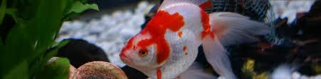 aquarium poisson prix vente en ligne de poissons d aquarium et accessoires oxyfish