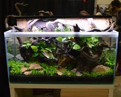 Aquascaping Live! 2016 - Large Tank Entries & Results Out Of Ideas How To Draw Inspiration From Others Aquascapes Aquascaping Aquarium The Art The Planted Plant Stock Photo 65827924 Shutterstock Continuity Aquascape Video Gallery By James Findley Green With River Rocks Aqua Rebell Qualifyings For 2015 Maintenance And Care Guide Outstanding Saltwater Designs 2012 Part 1 Youtube Dennerle Workshop Fish