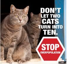 service cats we ll fix em free charlottesville albemarle spca
