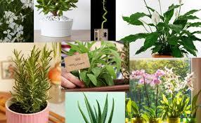 pflanzen wohnzimmer feng shui caseconrad cute766