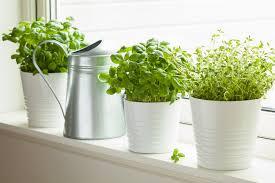 kräutergarten in der küche die schönsten ideen und tipps