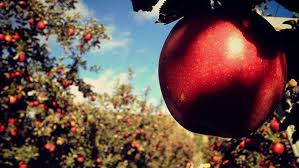 Pumpkin Picking Riverhead by Apple Picking On Long Island 2017 Where To Pick Your Apples